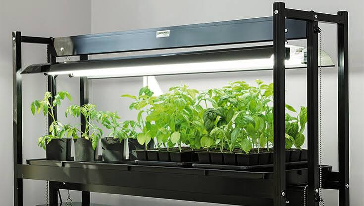 Grow Lights Buying Guide